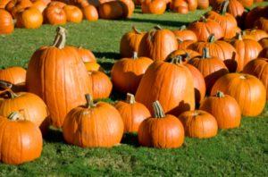 pumpkin-patch.jpg