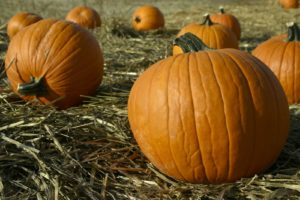 Colorado-Pumpkin-Patch-pickout.jpg