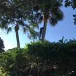 palm-tree-pruning.jpeg