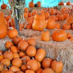 pumpkin-patch2.jpg