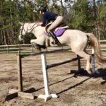 horsecamp.jpeg