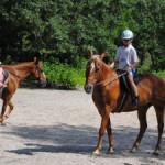 summercamp-horses-300-225.jpg