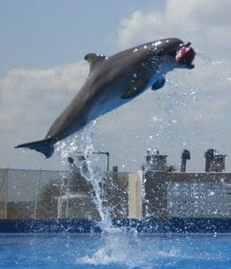 Marineland Dolphin Adventure
