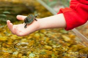 Turtle Petting at Tree Hill Nature Center