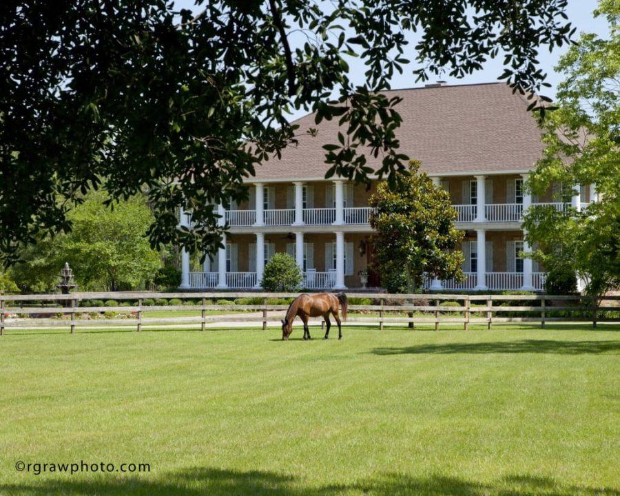 Horse Stamp Inn 0931a1