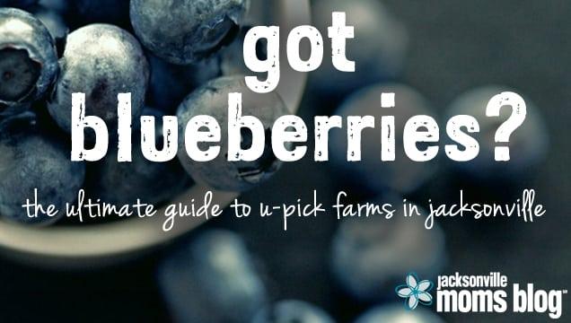 Blueberry Farms In Jacksonville, FL