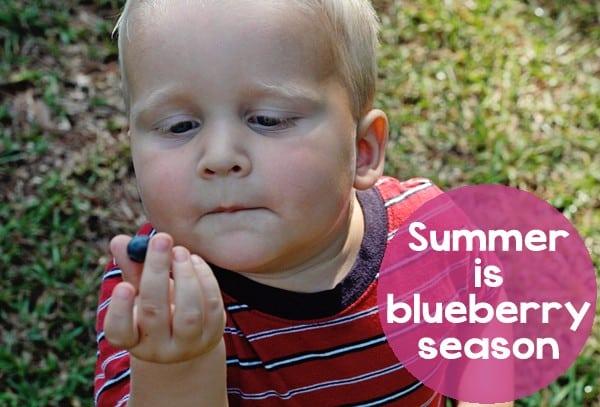 BlueberrySeason