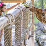 Kids Free November Featuring The Cummer, Catty Shack Ranch, MOCA & The Jacksonville Zoo!