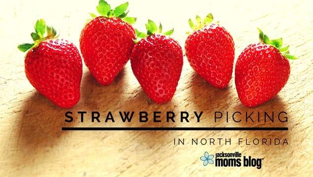 StrawberryUPickInJacksonville