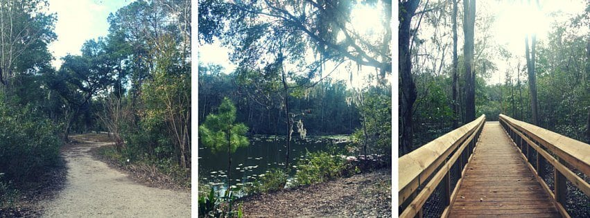 Spark up the heat with summer dates - Jacksonville arboretum and gardens ...