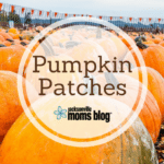 Guide to Pumpkin Patches in Jacksonville
