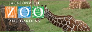 jacksonville-zoo-giraffes