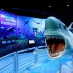 Museum of Science & History: Jacksonville's Kids Free November