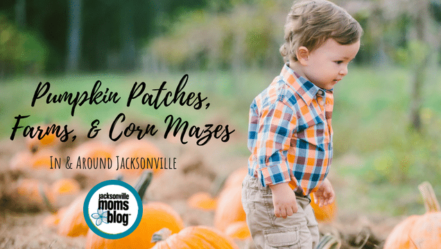 Pumpkin Patches, Farms, & Corn Mazes In Jacksonville!