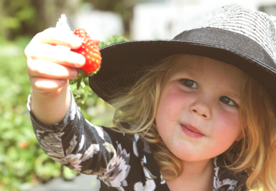 Strawberry Farms in Jacksonville