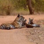 Wildlife Animal Refuge Programs In & Around Jax