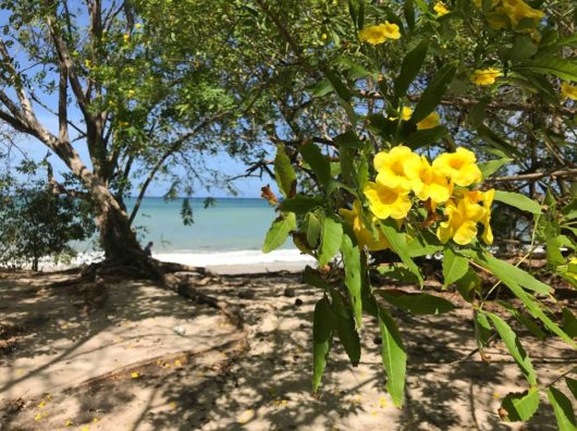 Yes, You Can Pura Vida in Costa Rica with Kids!