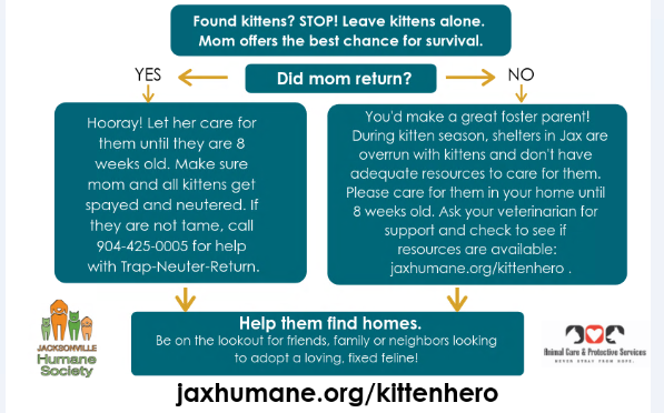Charity Spotlight: Jacksonville Humane Society