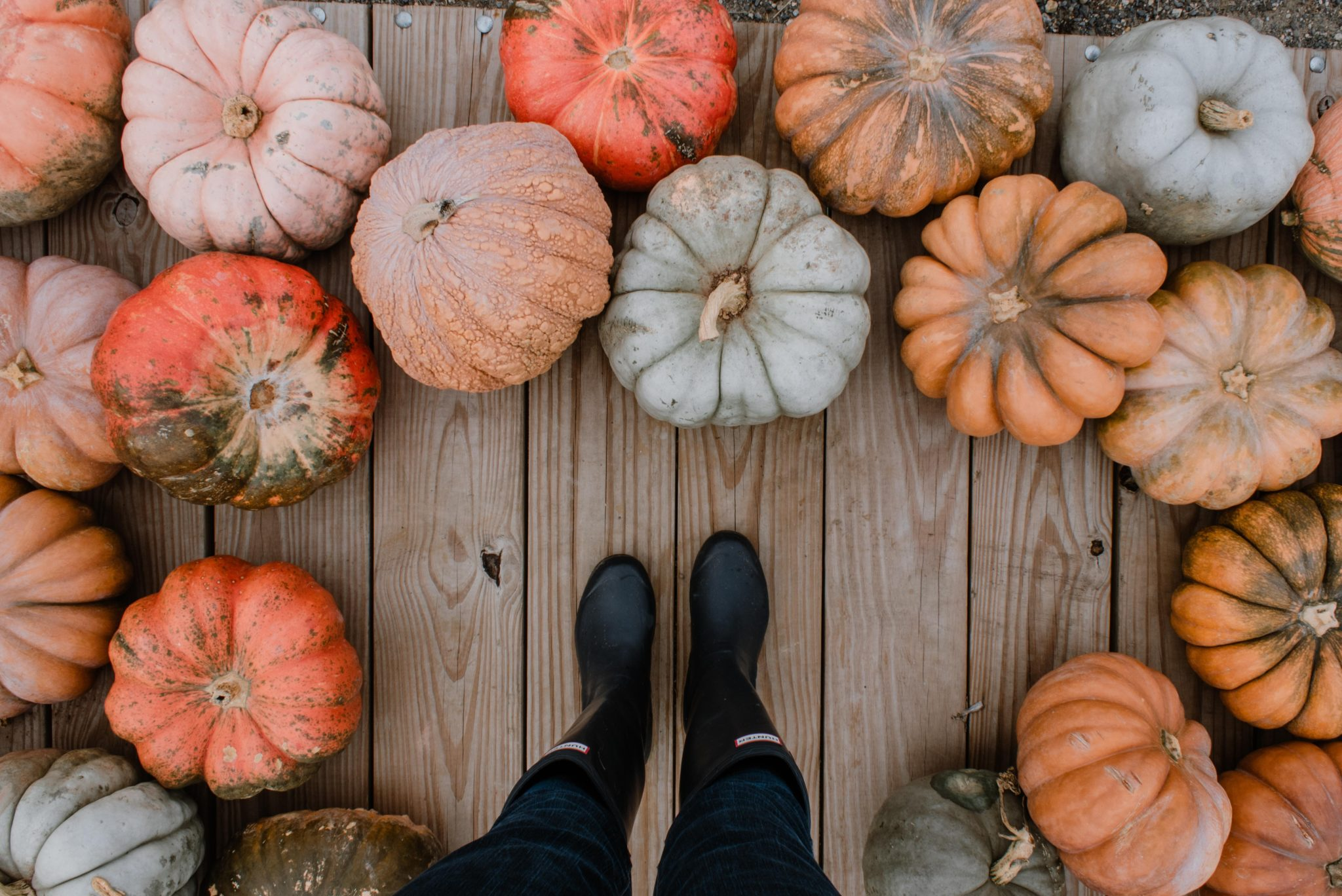 The Best Pumpkin Patches, Farms, & Corn Mazes In and Around Jacksonville!