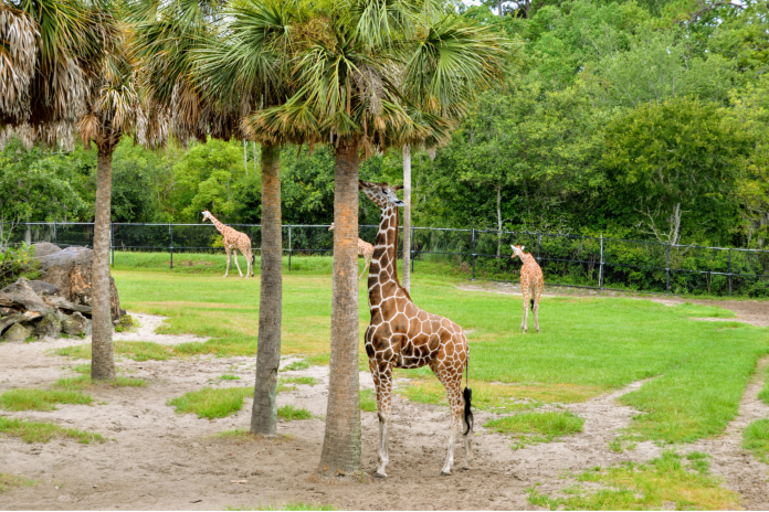 jax zoo and gardens